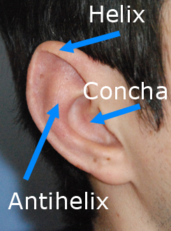 Otoplasty Ear Landmarks